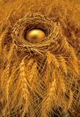 themes on wealth/ golden egg in nest/winter wheat