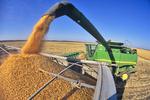 grain corn being loaded into grain truck