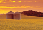grain bins in canola field