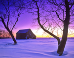 winter landscape with barn framed by trees
