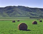 alfalfa rolls/hills