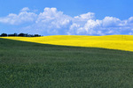 grain/canola field patterns, Tiger Hills, Manitoba, Canada