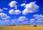 spring wheat harvest/wind turbines