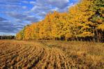 farmland/autumn