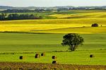 farmland near Bruxelles, Manitoba, Canada