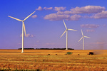 Canola harvest among wind turbines , St . Leon , Manitoba , Canada