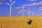farmer in spring wheat field / wind turbines, St . Leon , Manitoba , Canada