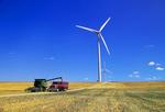 spring wheat harvest/wind turbines St. Leon, Manitoba, Canada