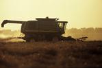 canola harvest, Canadian Prairies
