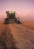 spring wheat harvest , Canadian Prairies near Dugald, Manitoba