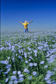 man in blooming flax field, near Roland, Manitoba, Canada