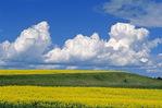 Cumulonimbus cloud buildup/canola fields near St. Leon, Manitoba, Canada