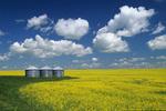 grain bins, canola near Somerset, Manitoba, Canada