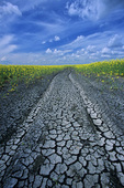 road through dry farmland near Winnipeg, Manitoba, Canada