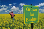 biofuel sign in canola field