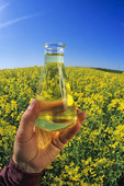 hand holding flask with finished biodiesel made from canola/rapeseed