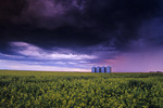 dramatic sky with canola and grain bins in the background , near Carey , Manitoba , Canada