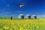 girl flying kite in canola field with grain bins in the background, Tiger Hills, Manitoba, Canada