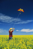 a girl flies a kite in a canola/rapeseed field, Tiger Hills, Manitoba, Canada