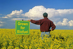 a farmer looks out over his canola crop being grown for biodiesel, Manitoba, Canada