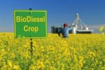 biofuel sign in canola field with grain storage structure in background, near Niverville, Manitoba, Canada