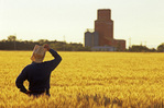 a man looks out over a winter wheat crop with grain elevator in the background, Carey, Manitoba, Canada