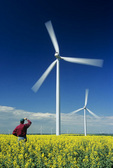 a farmer looks out over wind turbines and his bloom stage canola/rapeseed crop, St. Leon, Manitoba, Canada