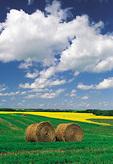 alfalfa, canola fields, Tiger Hills near Somerset, Manitoba, Canada