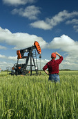 a man looks out over a wheat field with an oil pumpjack in the background, near Sinclair, Manitoba, Canada