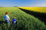 a father and son look out over wheat and canola fields near Holland, Manitoba, Canada
