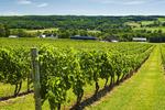 Gasperau Valley vineyards, near Wolfville, Nova Scotia, Canada