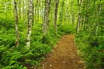 Cape Split hiking trail, near Hals Harbour, Nova Scotia