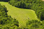 view from Blomidon Lookoff showing farmland , Annapolis Valley, Nova Scotia, Canada