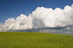 pod stage canola field with oil pumpjack and cumulonimbus clouds in the background, near Torquay, Saskatchewan, Canada