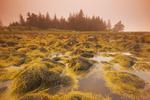 rockweed along the coast, Bear Point, Bay of Fundy, Nova Scotia, Canada