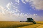a combine harvester straight cuts spring wheat near Sanford, Manitoba, Canada