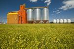 flax field,  grain elevator, Kincaid, Saskatchewan, Canada