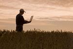 a man checks a mature, harvest ready soybean field, Manitoba, Canada