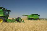 two combine harvester work a field of spring wheat,  near La Salle, Manitoba, Canada