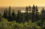 view from trail going to the Spirit Sands, Spruce Woods Provincial Park, Manitoba, Canada