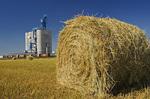 inland grain terminal and oat roll near Souris,Manitoba , Canada