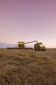 a combine harvester straight cuts a mature standing field of canola while unloading into a grain wagon on the go during the harvest, near Lortte, Manitoba, Canada