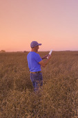 a farmer inputs data into a tablet while scouting a mature harvest ready canola field that is going to be straight cut, near Lorette, Manitoba, Canada