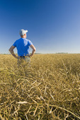 a farmer scouts a mature harvest ready canola field that is going to be straight cut, near Lorette, Manitoba, Canada