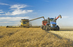 a combine harvester straight cuts a mature standing field of canola while unloading into a grain wagon on the go during the harvest, near Lorette, Manitoba, Canada