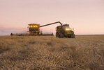 a combine harvester straight cuts a mature standing field of canola while unloading into a grain wagon on the go during the harvest, near Brunkild, Manitoba, Canada