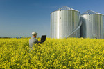 man using a laptop in a field of bloom stage canola with grain bins(silos) in the background,  Saskatchewan,  Manitoba, Canada