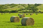 alfalfa round bales,  Qu´Appelle  River Valley,  Saskatchewan, Canada