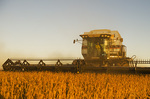 a combine harvests soybeans during the evening, near Lorette, Manitoba, Canada