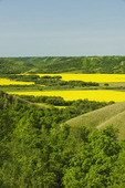 eroded hills and farmland with canola,  the Qu´Appelle  River Valley,  Saskatchewan, Canada